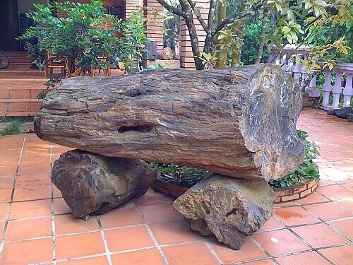 fossilized tree